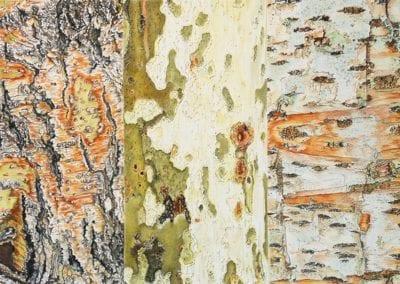 """""""Tree Bark Medley"""""""