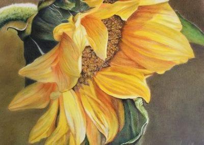 Side of Sunflower