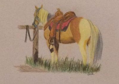 """""""Wyoming Cow Pony"""""""