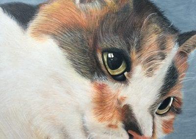 """""""Calico Cat"""""""
