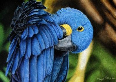 """""""Hyacynth Macaw"""""""