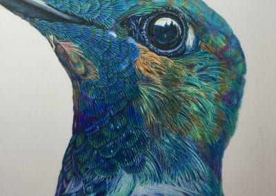 """Blue Hummingbird"""