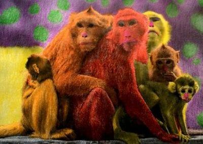 """Monkey Family"""