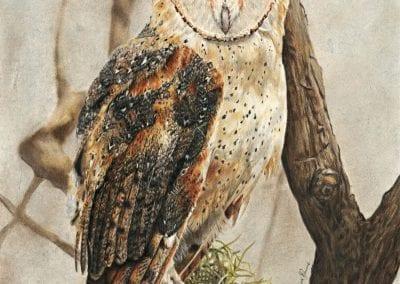 """""""Charlotte's Owl"""""""