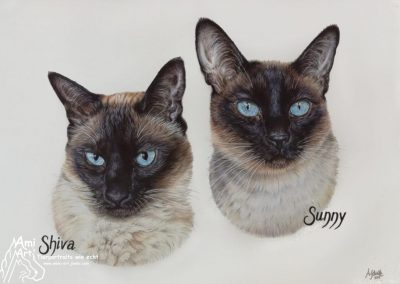 """Two siamese cats"""