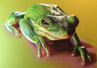 """Green Frog"""