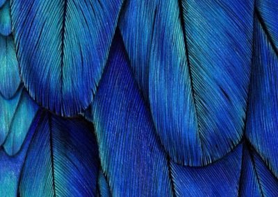 """Blue parrot feathers"""