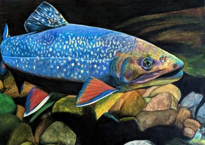 """Eastern Brook Trout"""