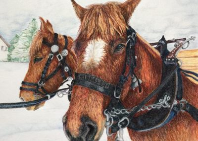 """Working Horses of Switerland"""