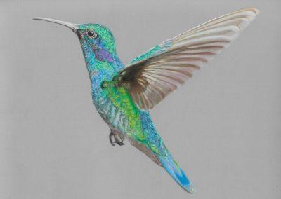 """Hummingbird"""