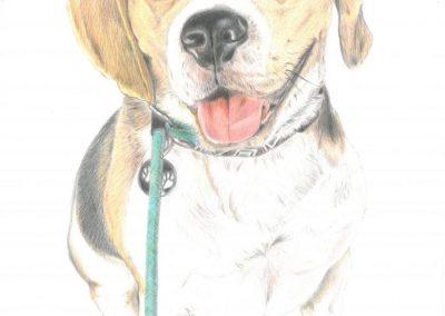 """""""Cesar the Beagle"""""""