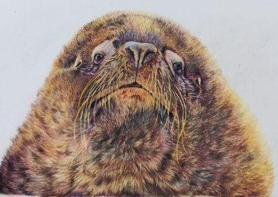"""""""Sea Lion"""""""