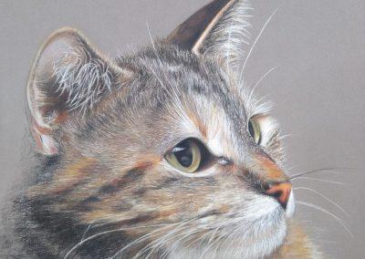 """""""Portrait of a cat"""""""