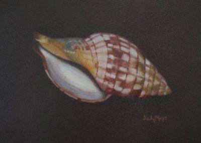"""""""Tulip Snail"""""""