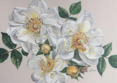 """""""White Rose Medley"""""""