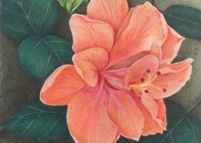 """Hibiscus In Bloom"""