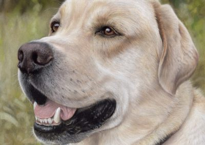 """Labrador"""