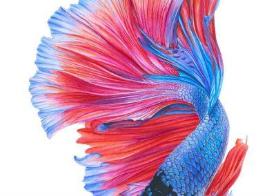"""""""Colorful Betta Fish"""""""