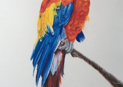 """""""Macaw"""""""