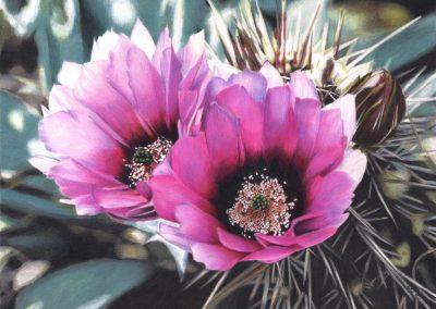 """Beauty Among Thorns"""