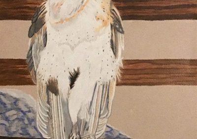 """""""Barn Owl Cheyenne"""""""