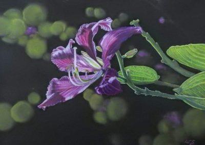 """""""Purple Bauhinia"""""""