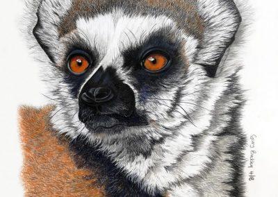 """""""Ring Tailed Lemur"""""""