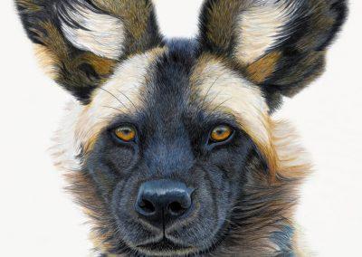 """""""Wild Hunting Dog"""""""