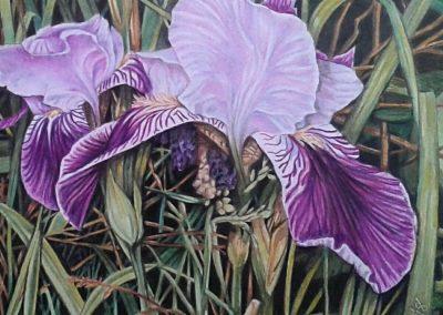 """""""Backyard Iris"""""""
