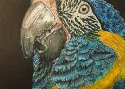 """Mac the Macaw"""